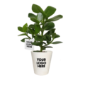 OGreen-Clusia-kaartje + pot plant-your-logo